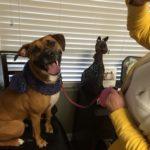 Maggie is modeling her new muffler